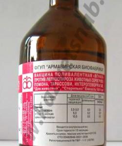 Вакцина против лептоспироза свиней и других с/х животных поливалентная - 100 мл