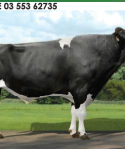 Семя быка Атанас-М Германия